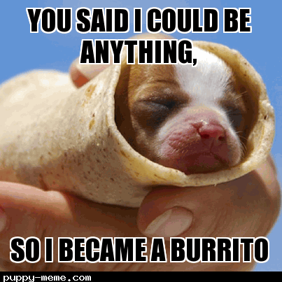 Burrito puppy
