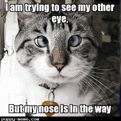 cross-eyed kitty
