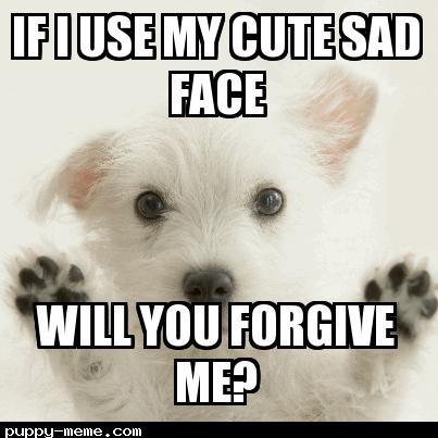 Cute Cat Memes I M Sorry