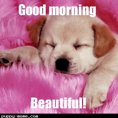 Image: Good morning