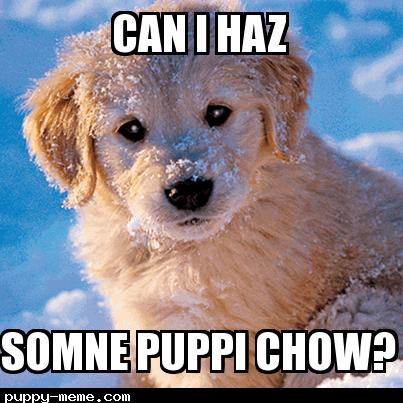puppi chow