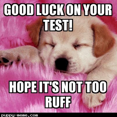 Dog Good Luck Meme