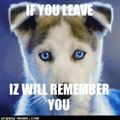 dog who sad