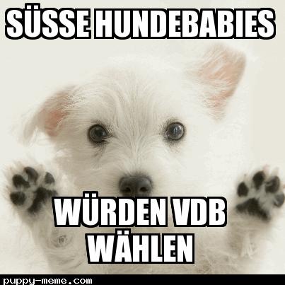 Vdb puppy