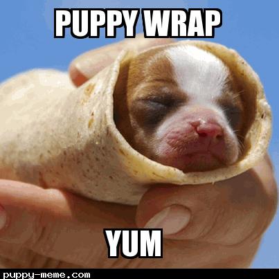 Puppy wrap