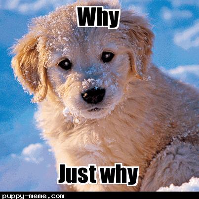 Puppy meme 2