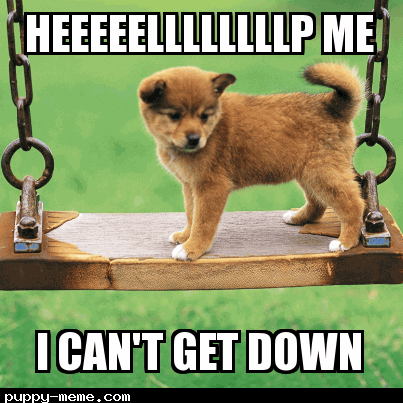 Puppy meme 3