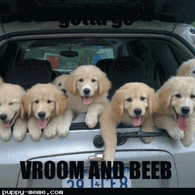 car pups