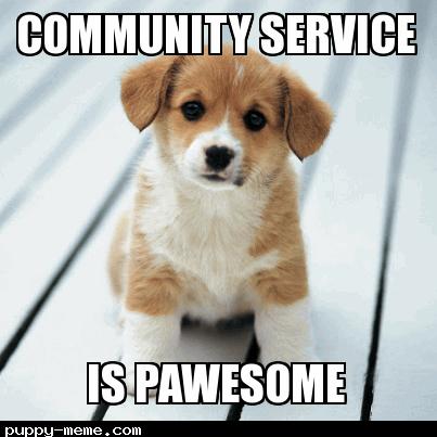 Service Dog Home Training