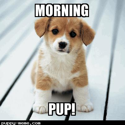 Morning Pup!