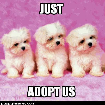 Just Adopt Us