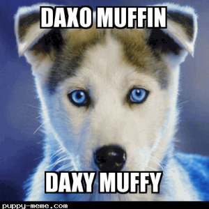 dAXO MUFFIN