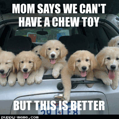 Puppy meme- generator