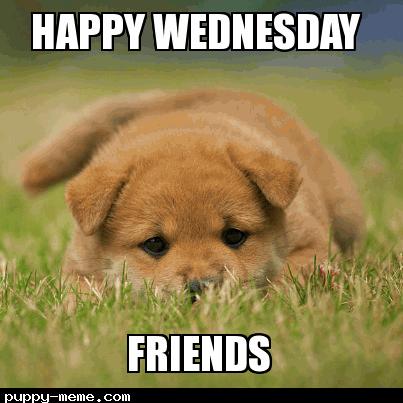 Puppy wednesday