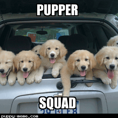 puppers