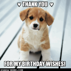 Thank You For my Birthday Wishes Puppy