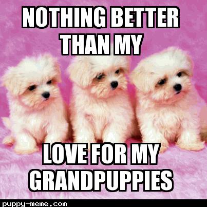 Grandpuppies