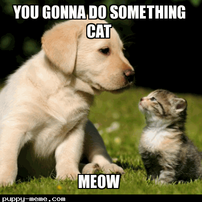 Was good cat
