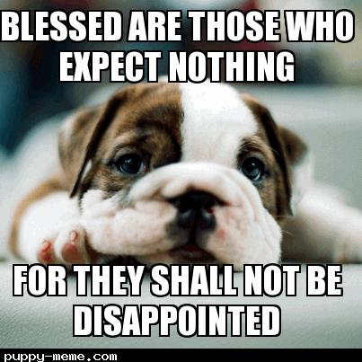 Dogattitude