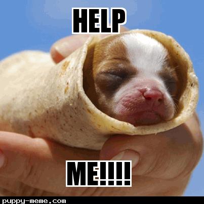 Puppy in bread
