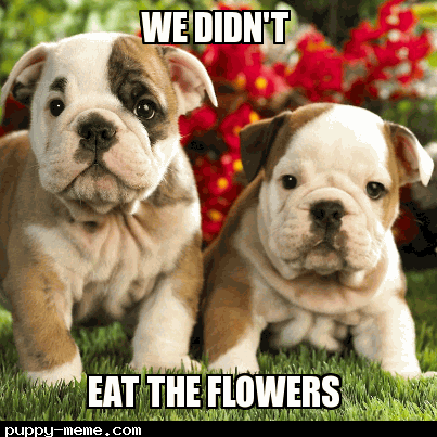 WE DIDN'T EAT THE FLOWERS