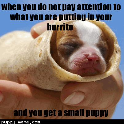 DOG burrito