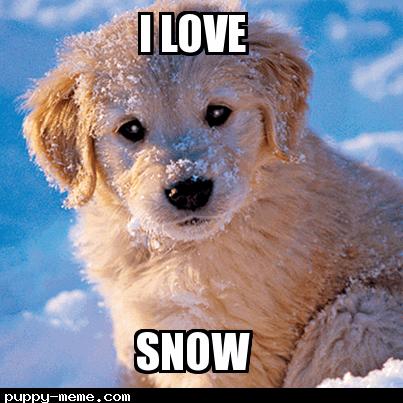Snow pupper