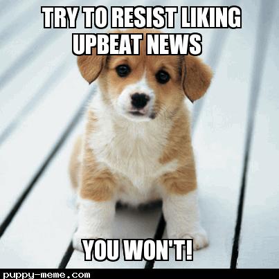 puppy_meme_1