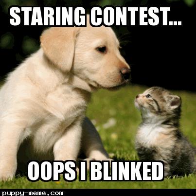Staring Puppy meme