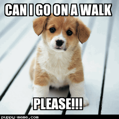 Can I go on a walk?