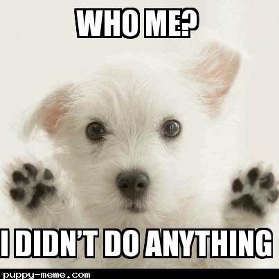 Puppy meme