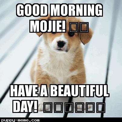 Good Morning Mojie!  ❤️
