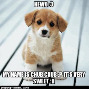 Cute Chub Chub Dog *Better than your dog hehe*