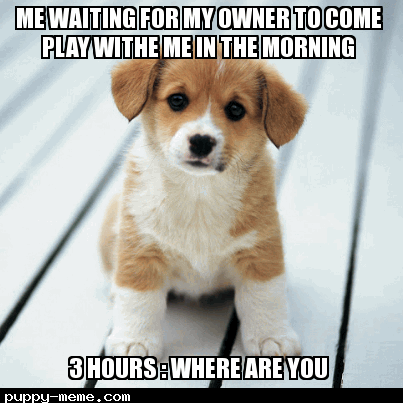 me waiting for my owner be like
