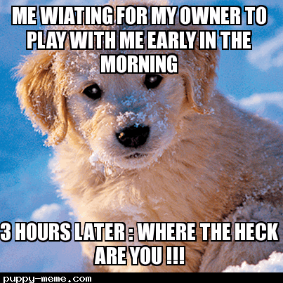 Me waiting for my owner to play with me be like.