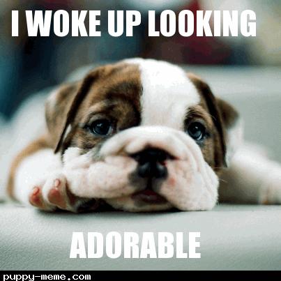1st puppy memes