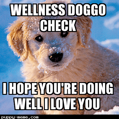 Wellness Doggo