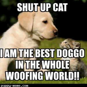 THE BEST DOGGO